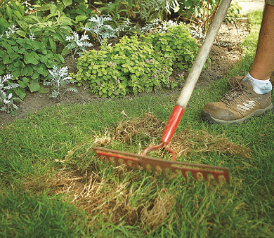 how to overseed lawn in fall