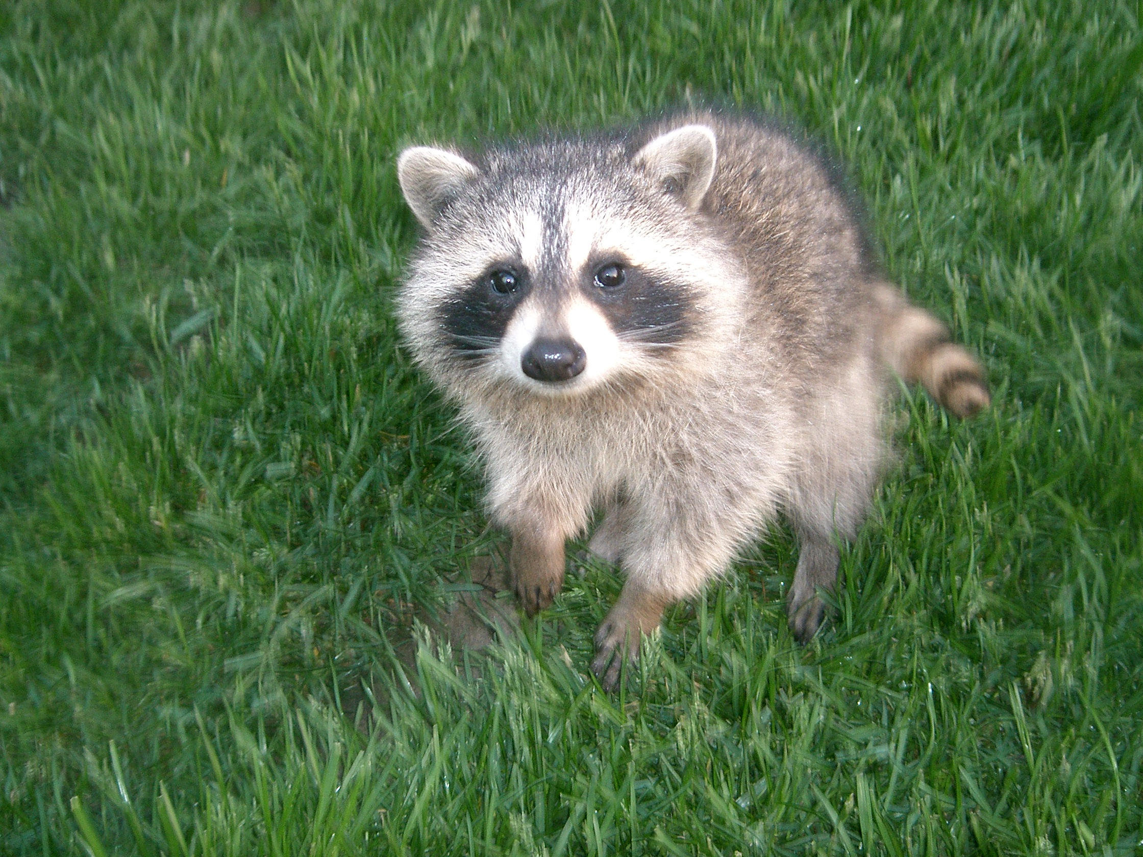 Critters frankie flowers grow eat live outdoors your garden expert How to keep raccoons out of garden