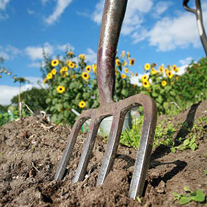 Protector Of Palms, Fingers And Fingernails, Garden Gloves Are Our Shield  Against Some Of The Dangers Of Gardening. From The Thorns Of Raspberry  Bushes To ...