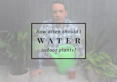 How often should I water my indoor plants?
