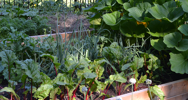 10 tips for harvesting your vegetable garden frankie flowers grow eat live outdoors your for How to pick lettuce from garden