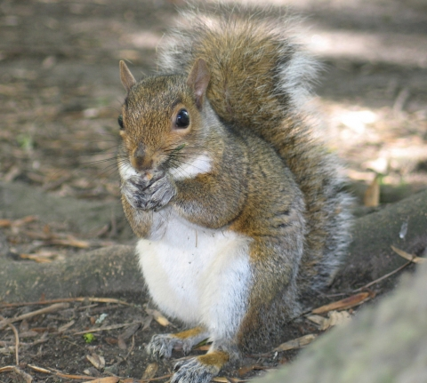 How To Keep Squirrels Out Of Your Garden Frankie Flowers Grow Eat Live Outdoors Your