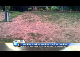 How you can save your yard from going brown in the summer