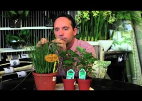 Growing Perennial Herbs
