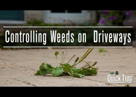 How to Control Weeds on Driveways | Scotts Miracle-Gro Canada