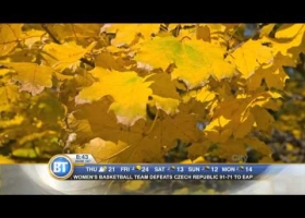 Frankie Flowers: All about fall foliage