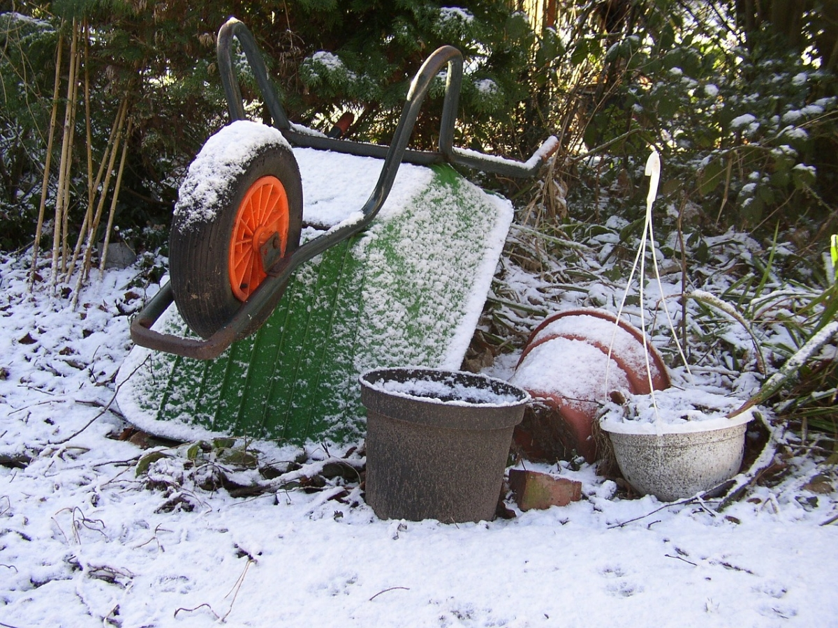 What to do with your containers in the winter frankie for Garden pods to live in