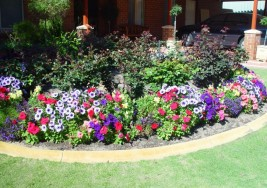Garden Design and Planting Tips