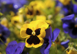 How to Use Colour in the Garden