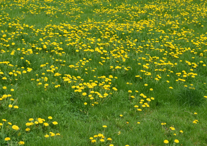 Beat the Weeds! Fall Lawn Care