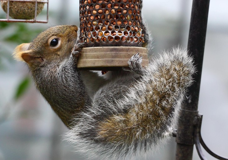 5 Things you Need to do to Rid your Gardens of Squirrels!