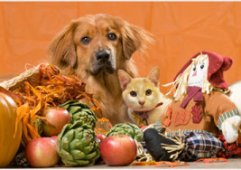 Keeping Your Pets Safe this Thanksgiving