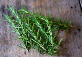 Fourth Day of Christmas- Rosemary