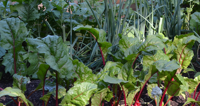 Five Things to In Your Vegetable Garden in July