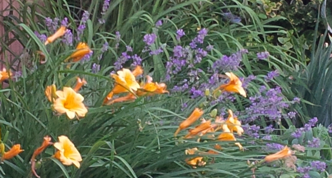 Five Things to Do in Your Flower Garden In July